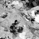 Life on the Rocks  (Nikon FM3A / Silvermax)