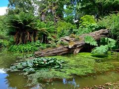 Water garden in Abbotsbury Subtropical Gardens 2