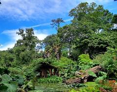 Water garden in Abbotsbury Subtropical Gardens 4