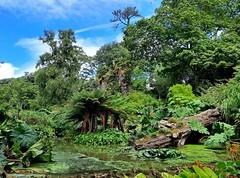 Water garden in Abbotsbury Subtropical Gardens 6