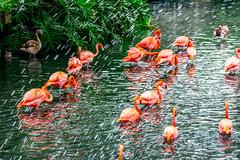 San Antonio Zoo residents