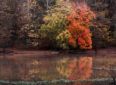 Autumn Herbst otoño automne