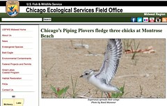 US Fish & Wildlife Service Chicago Ecological Services Field Office Website