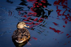 Bird and Water 3