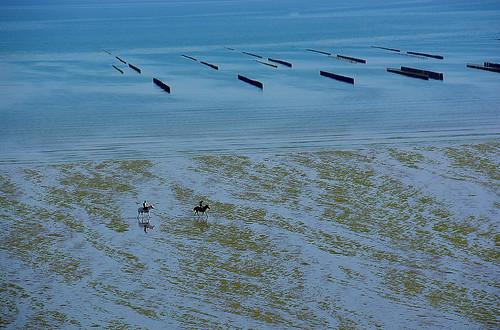 Cavaliers sur la plage Bretagne _2577