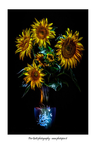 Vaso di girasoli - Vase of sunflowers