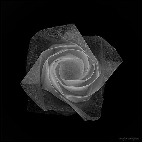 Topview of the Origami New Rose (Toshikazu Kawasaki)