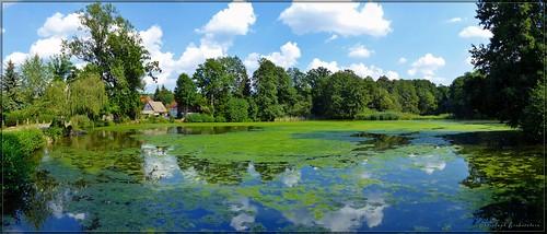 Teich in Bühlau