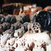 Hand carved marble elephant figurines for sale at Dilli Haat, a craft bazaar market in New Delhi India