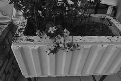 Cvijeće (137FJAKA_4389)