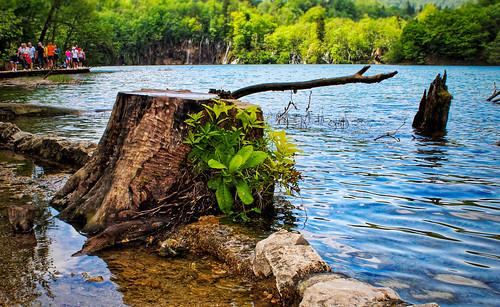 Nature's kingdom 💕�
