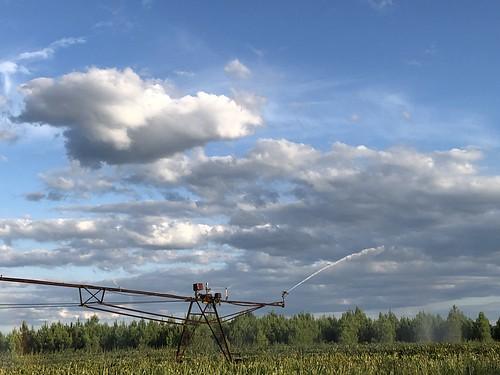 Irrigation d'un champs de maïs / Bewässerung eines Maisfeldes / Орошение кукурузного поля