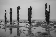 Black & White Reflections