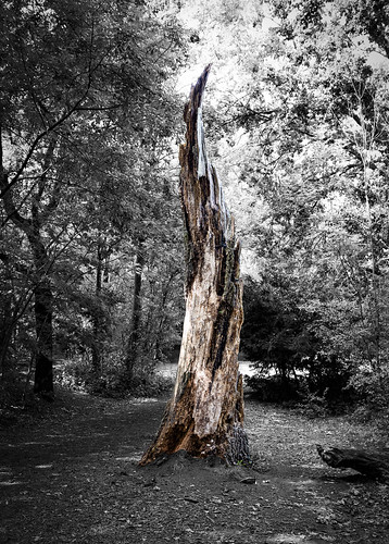 Old Tree, Hampstead Heath