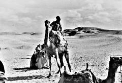 Egypt 1977
