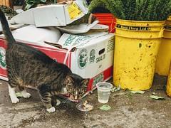 Florist cat on 6th Av