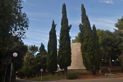 Drveće u pulskoj odmaralištu (137FJAKA_4398)