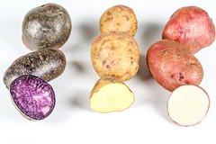 Red, yellow and purple potato varieties