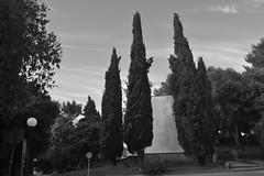 Drveće u pulskoj odmaralištu (137FJAKA_4397)