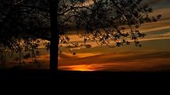Tree Sun.