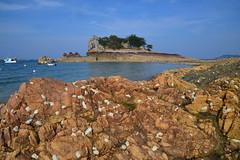 île et carapaces