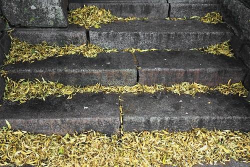 Johannes-Kirche - vertrocknete Lindenblüten auf den Stufen; Meldorf, Dithmarschen (4)