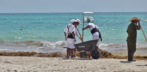MEXICO, Punta/Playa Maroma, An der Riviera Maya, Strand  am Hotel CataSeaweed clearing - about 3 hours of work every morning, 19961/12925