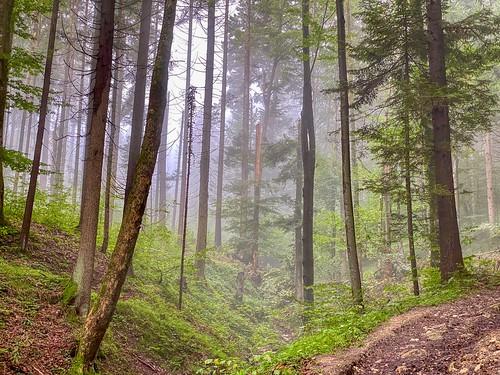 Misty forest on Nußlberg mountain near Kiefersfelden in Bavaria, Germany