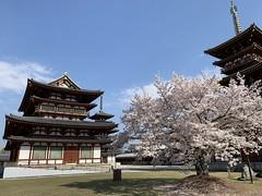 yakushiji_20200404151011