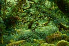 Wistman woods, Dartmoor