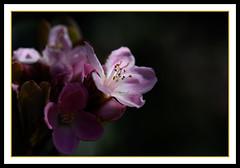 Blooming Shine