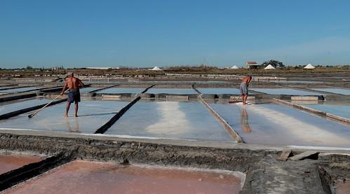The Salt Flats of Aveiro