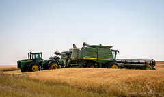 Sunflowers and Combines