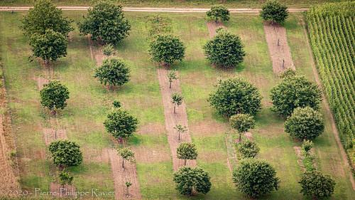 Arbres bien rangés en Dordogne