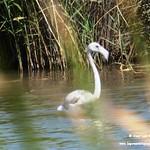 Fauna en las lagunas de La Guardia (Toledo) 6-9-2020