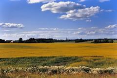 Farmland with church, near Ängelholm, Skåne, Sweden.