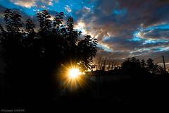 Rayons de soleil à travers le feuillage au crépuscule
