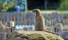 Yorkshire Wildlife Park 30/08/2020