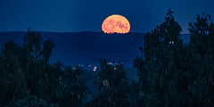 The rise of the fullmoon
