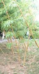 Sains-du-Nord le jardin japonais (2)