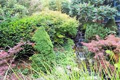 Sains-du-Nord le jardin japonais (1)