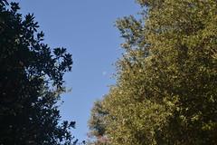 Drveće i pogled na Mjesec (137FJAKA_4412)