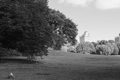 Prospect Park Landscape