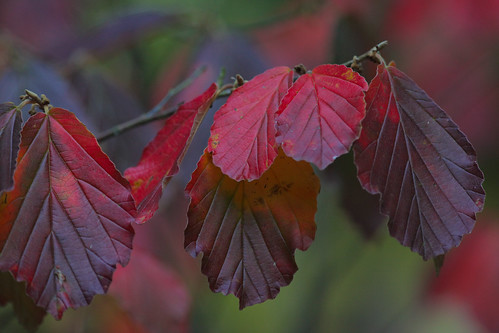 """""""Early signs of Autumn"""" (explored)"""