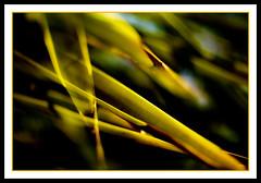 Natural Blades
