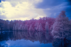 The Flooded Forest | Infrared