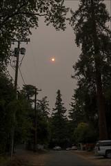 Smoky Morning in Ben Lomond, California