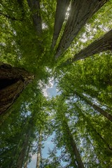 Cathedral Grove 10