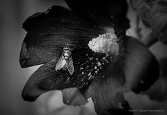 Macro Insects in B&W