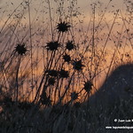 Puesta de sol en las lagunas de La Guardia (Toledo) 8-9-2020